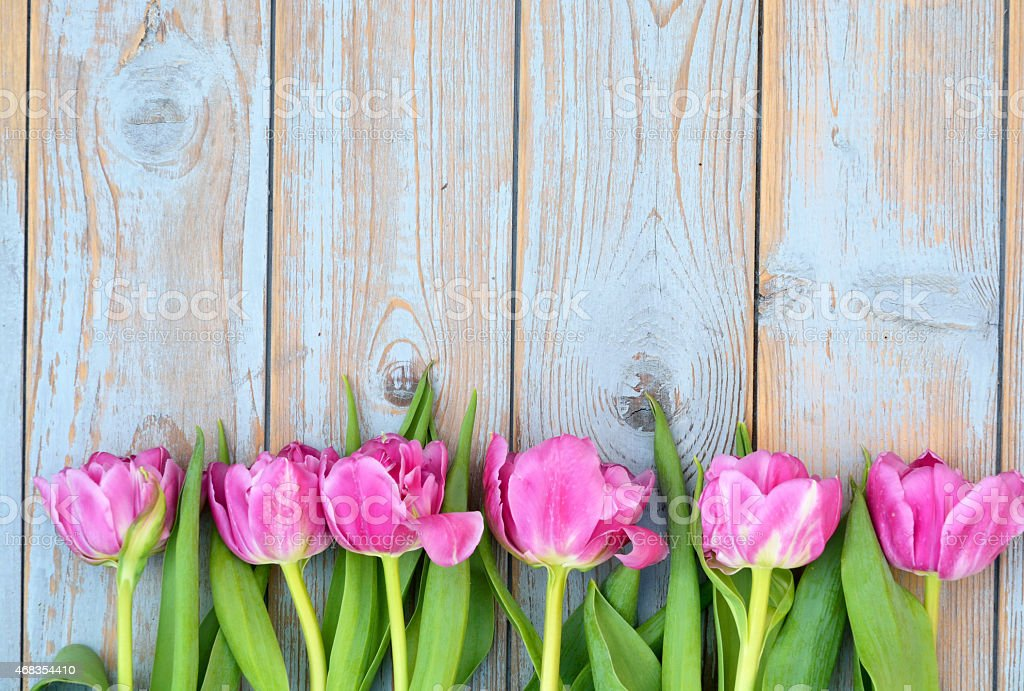 Row of pink tulips on old wood with empty space stock photo