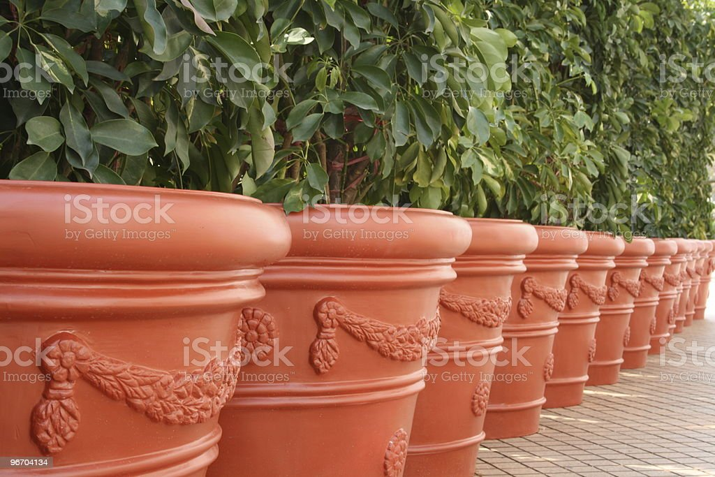 Row of Potted Trees royalty-free stock photo