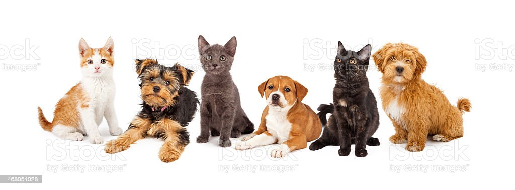 Row of Puppies and Kittens stock photo