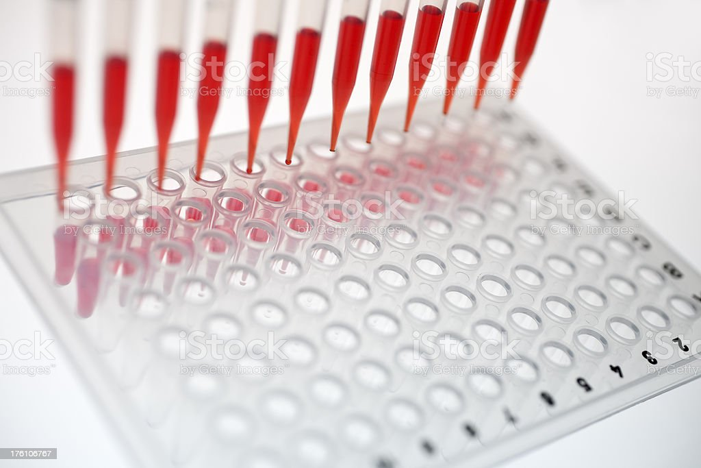 Row of red pipettes filling reservoir wells stock photo