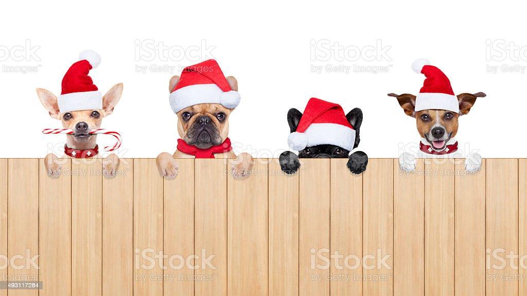 row of santa claus dogs stock photo