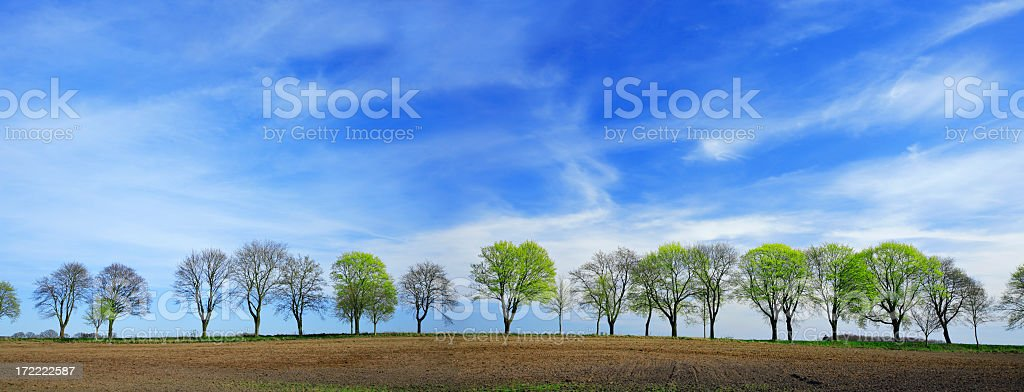 Row of Spring Trees stock photo