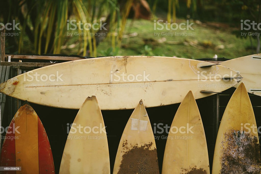Row of Sufboards with Green Background - Maui, Hawaii stock photo