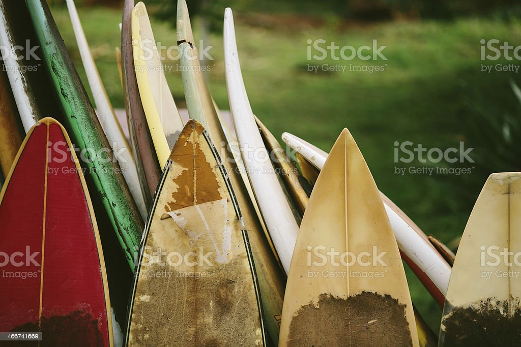 Row of Sufboards with Tropical Background - Maui, Hawaii stock photo