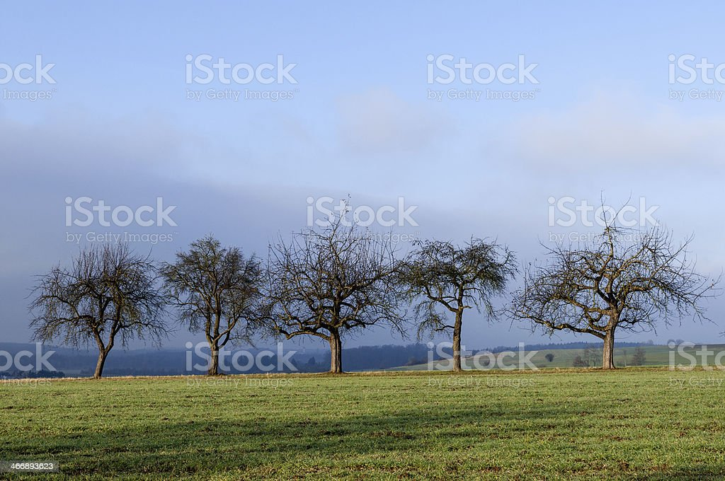 Row of trees. Agricultural landscape in southern Germany stock photo