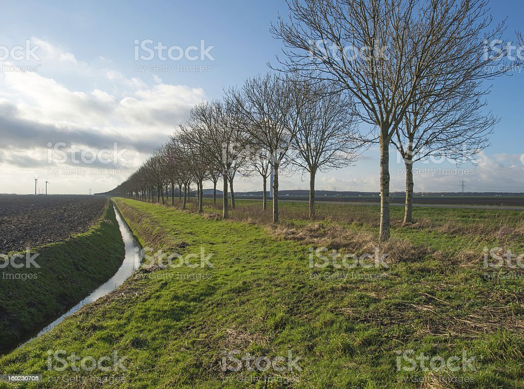 Row of trees along a ditch in winter royalty-free stock photo