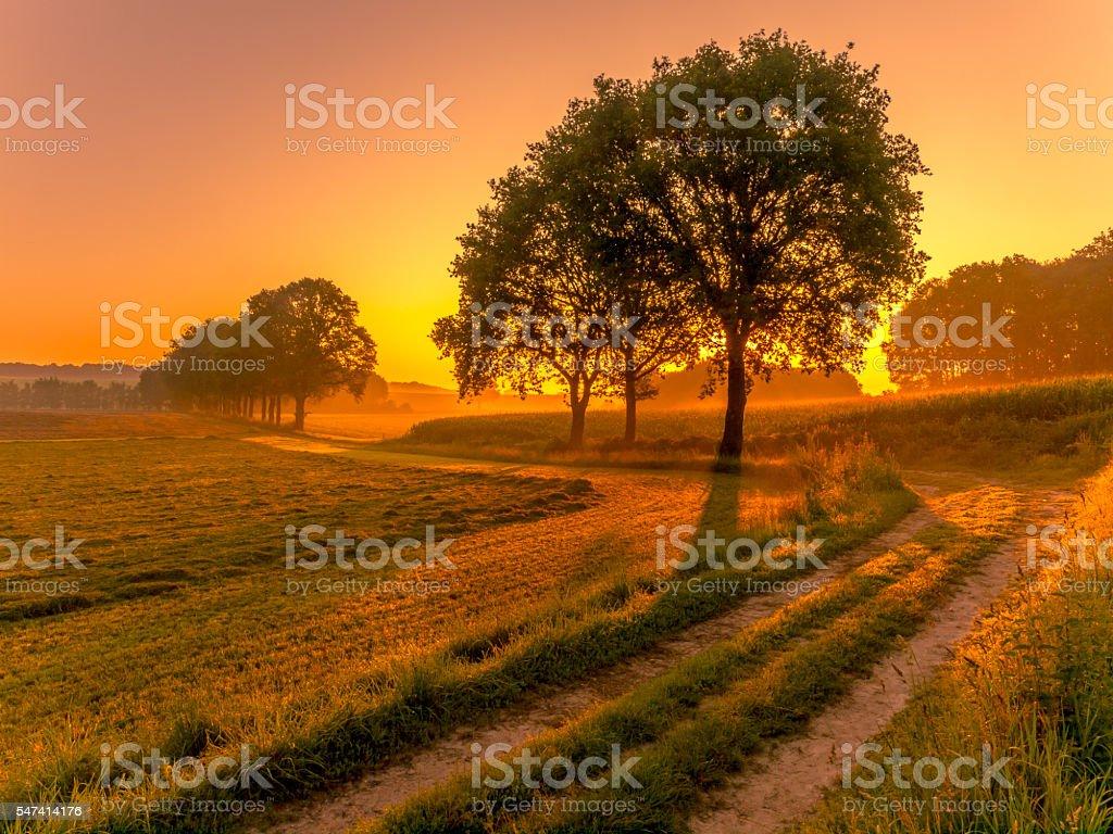 Row of trees at sunrise stock photo