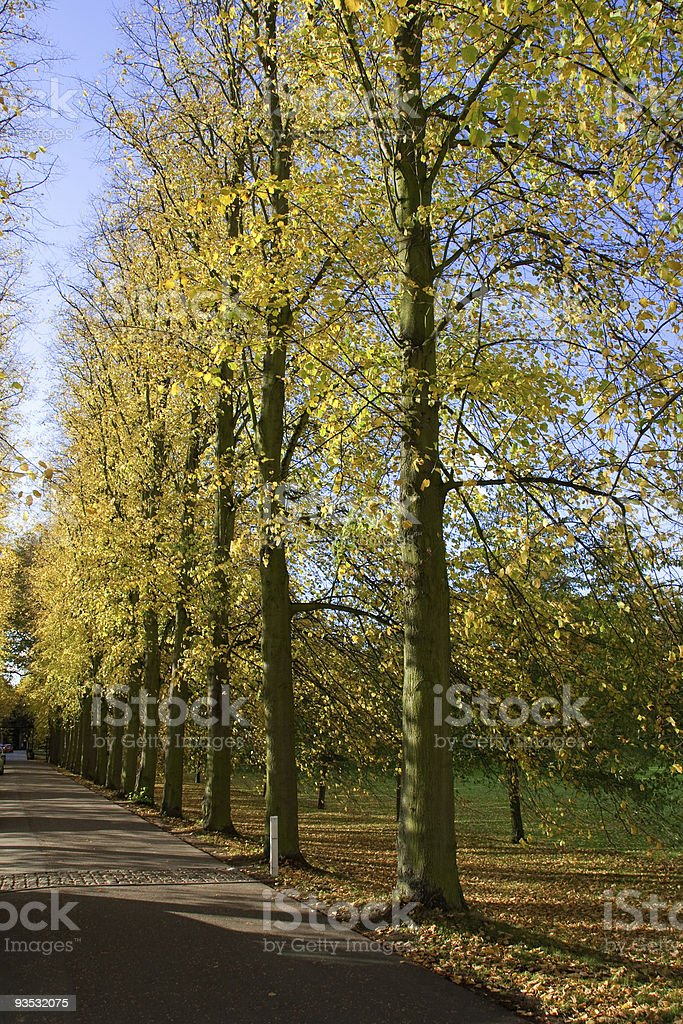 Row of Trees in Autumn royalty-free stock photo