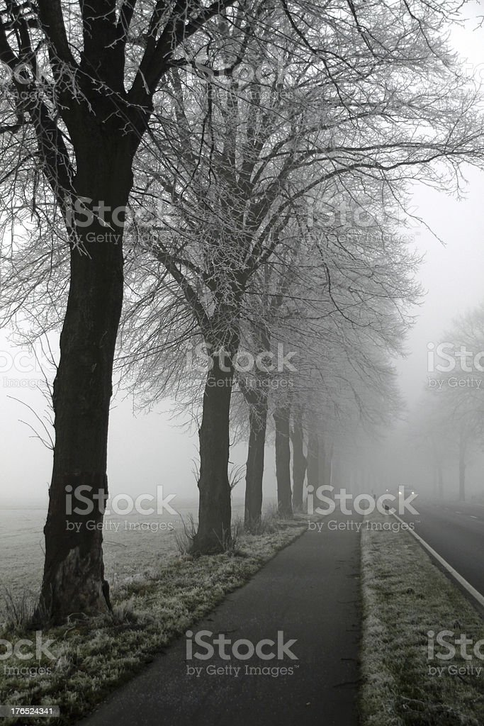 Row of trees in fog with road stock photo