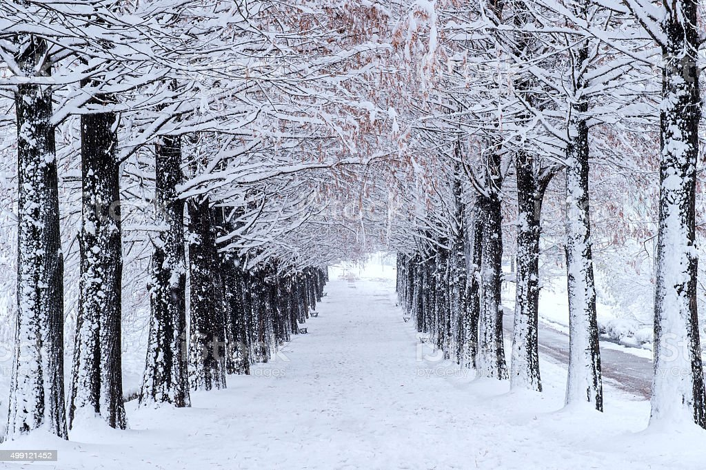 Row of trees in Winter with falling snow. stock photo