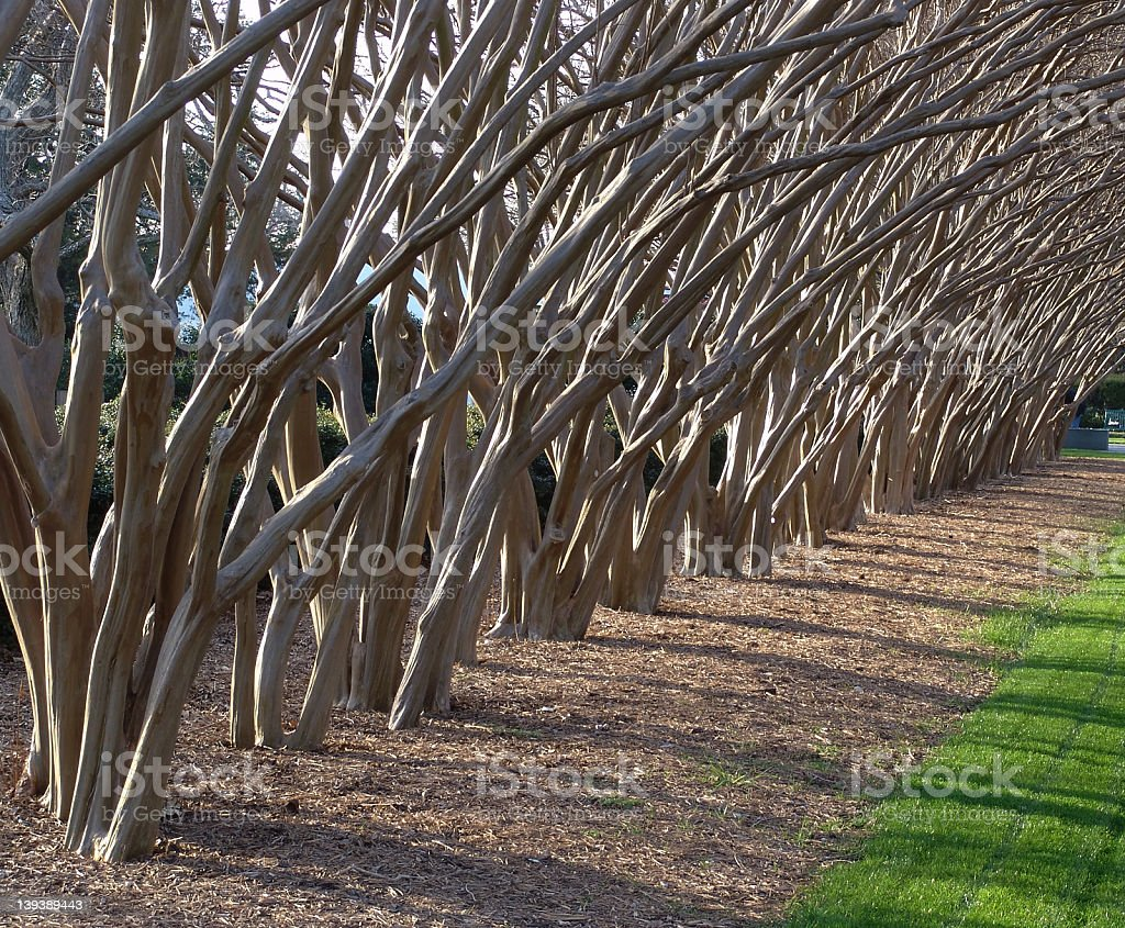 Row of trees stock photo