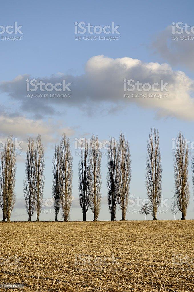 Row of trees royalty-free stock photo