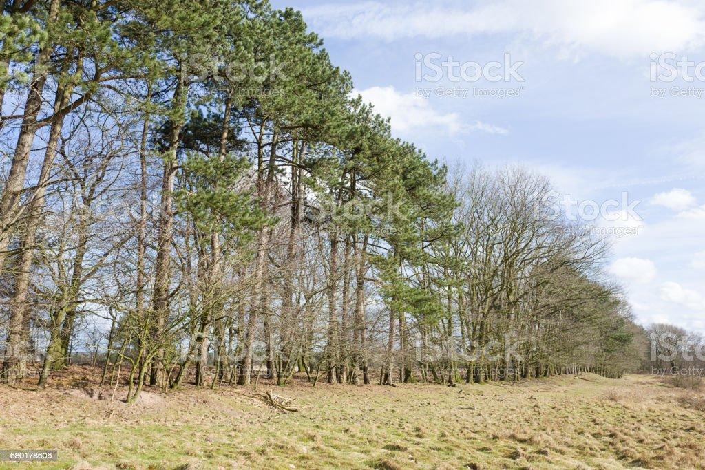 Row of trees. stock photo