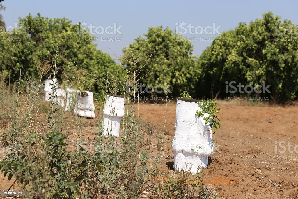 Row of White Cut Off Tree Trunks in the Field stock photo