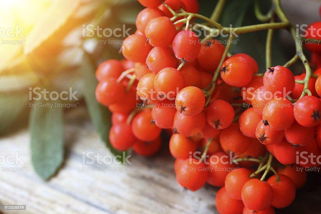 Rowanberries close up stock photo