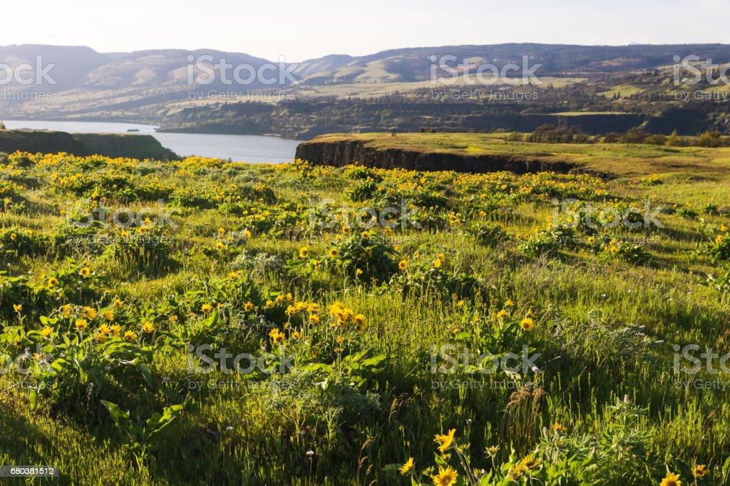Rowena Plateau in Oregon stock photo