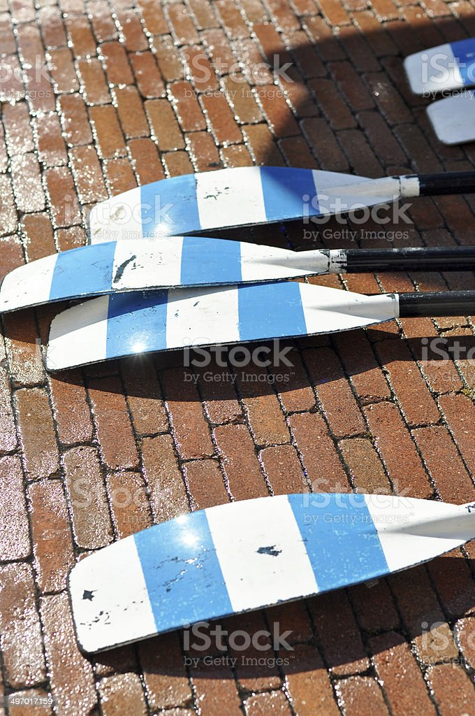 Rowers stock photo