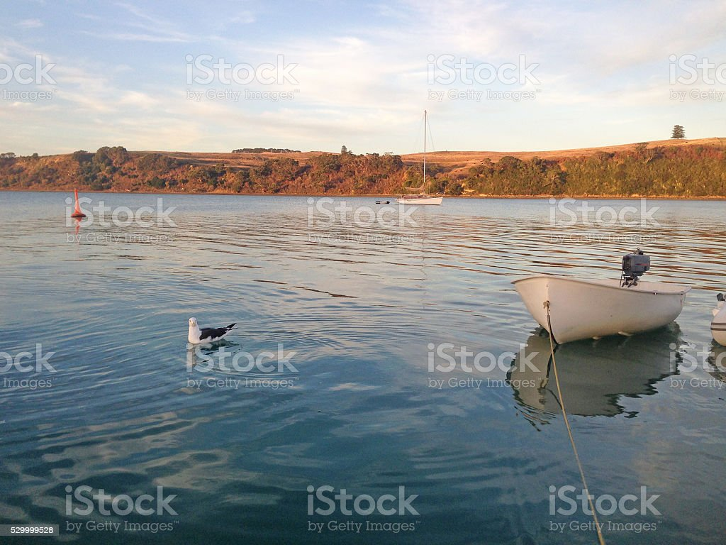 Rowing dinghy and seagull in a tranquil bay at dusk. stock photo