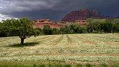 rows oat hay fields storm clouds Mount Kinesava Rockville Utah