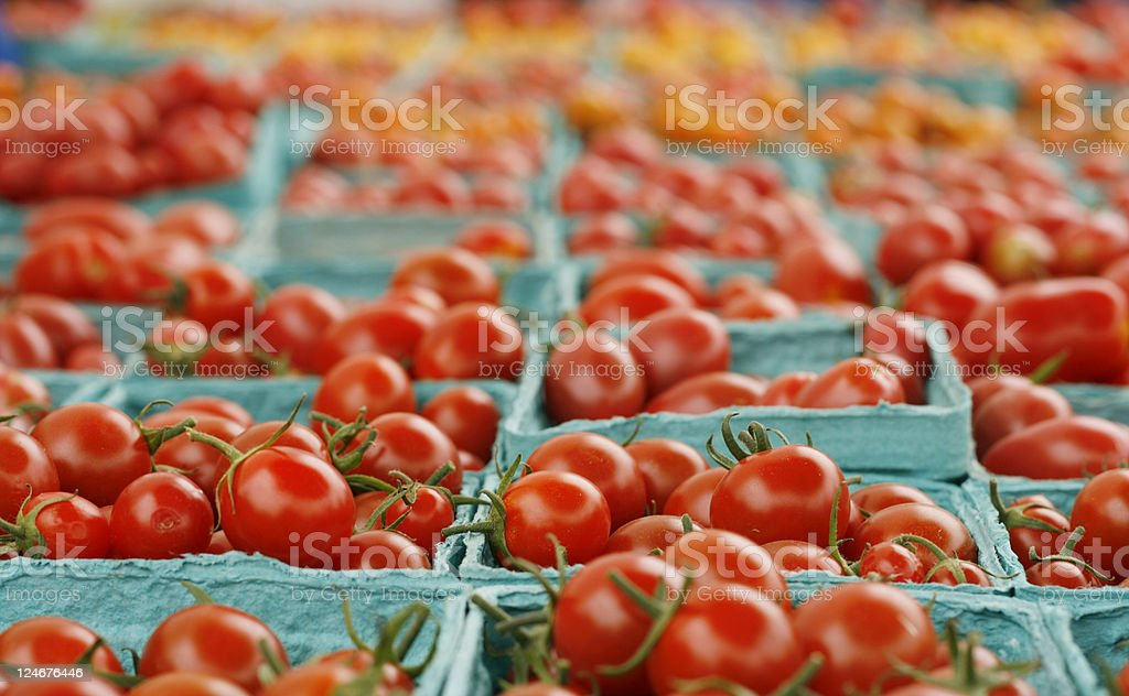 Rows of Cherry Tomatoes royalty-free stock photo
