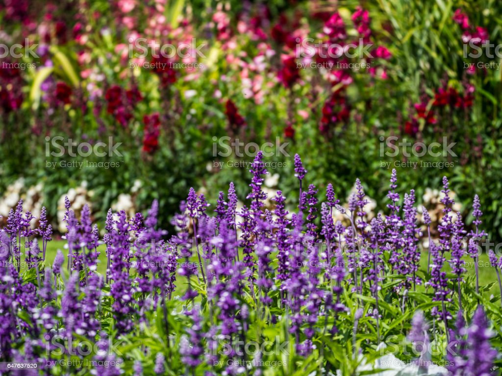 Rows of flowers stock photo