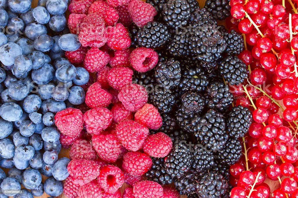 rows of  fresh berries on table stock photo