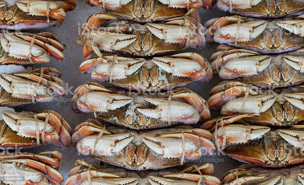 Rows of fresh crabs at market royalty-free stock photo