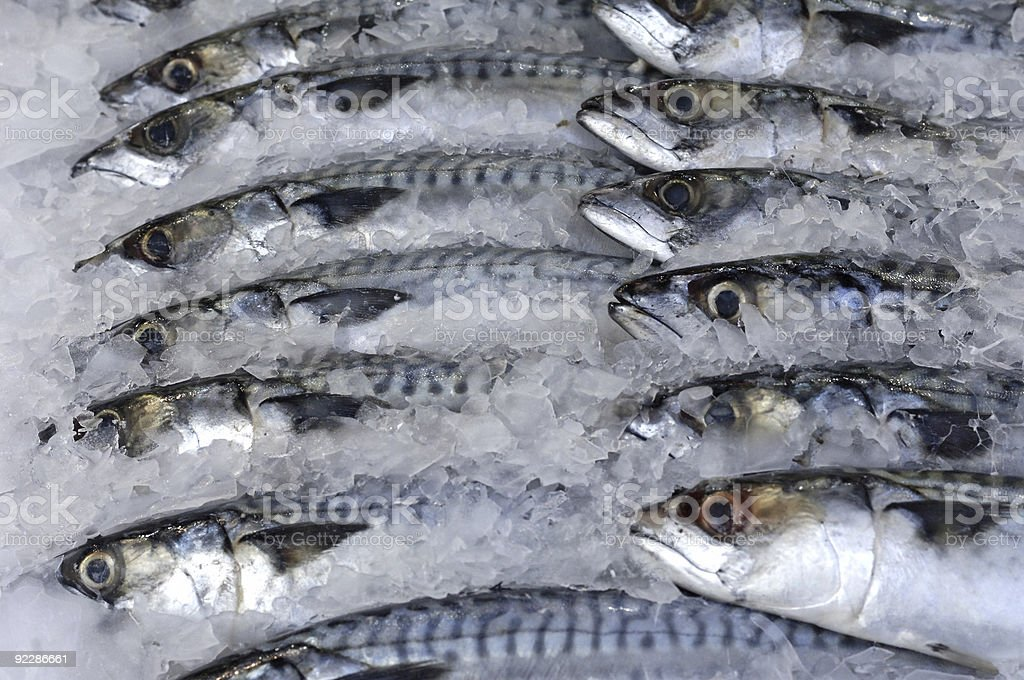 Rows of fresh fishes on ice in a market stock photo