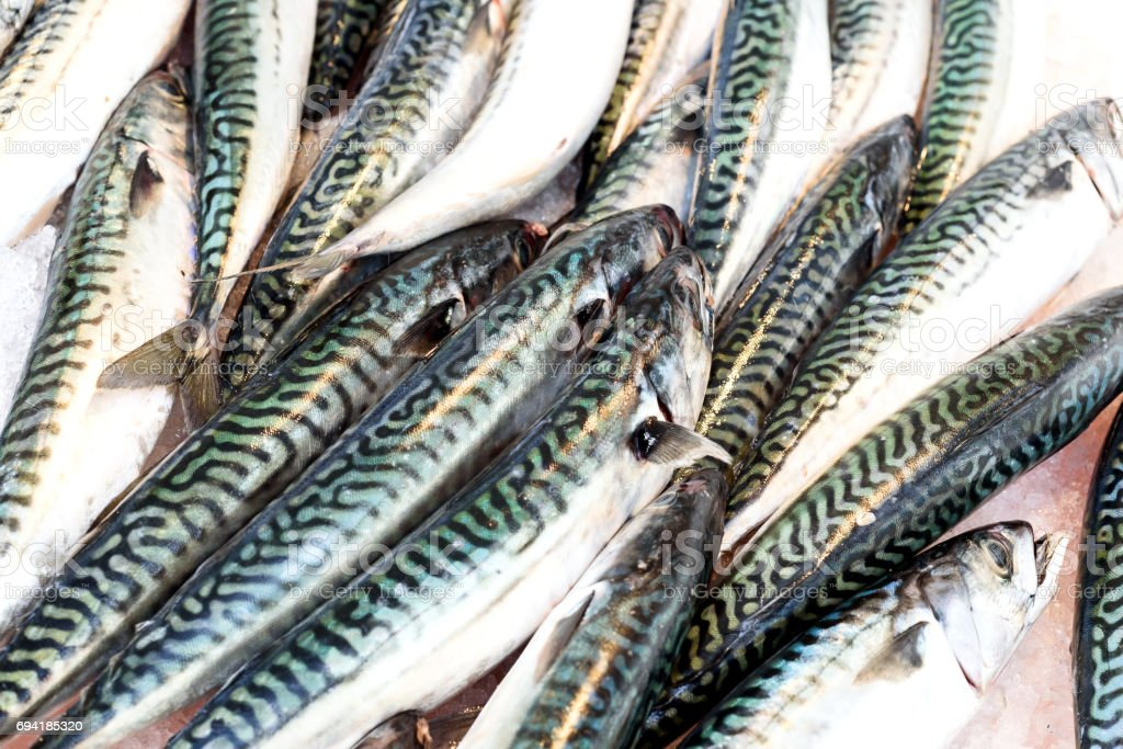 Rows of Fresh Mackerel on Ice stock photo