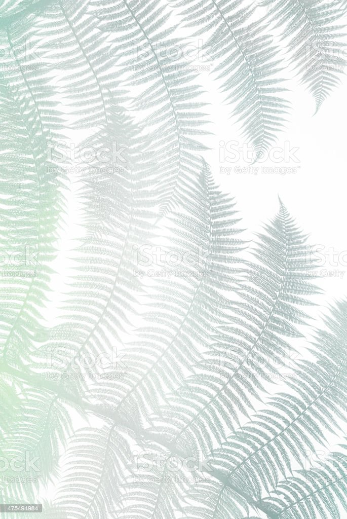 Rows of green rounded fern leaves silhouettes on white background stock photo