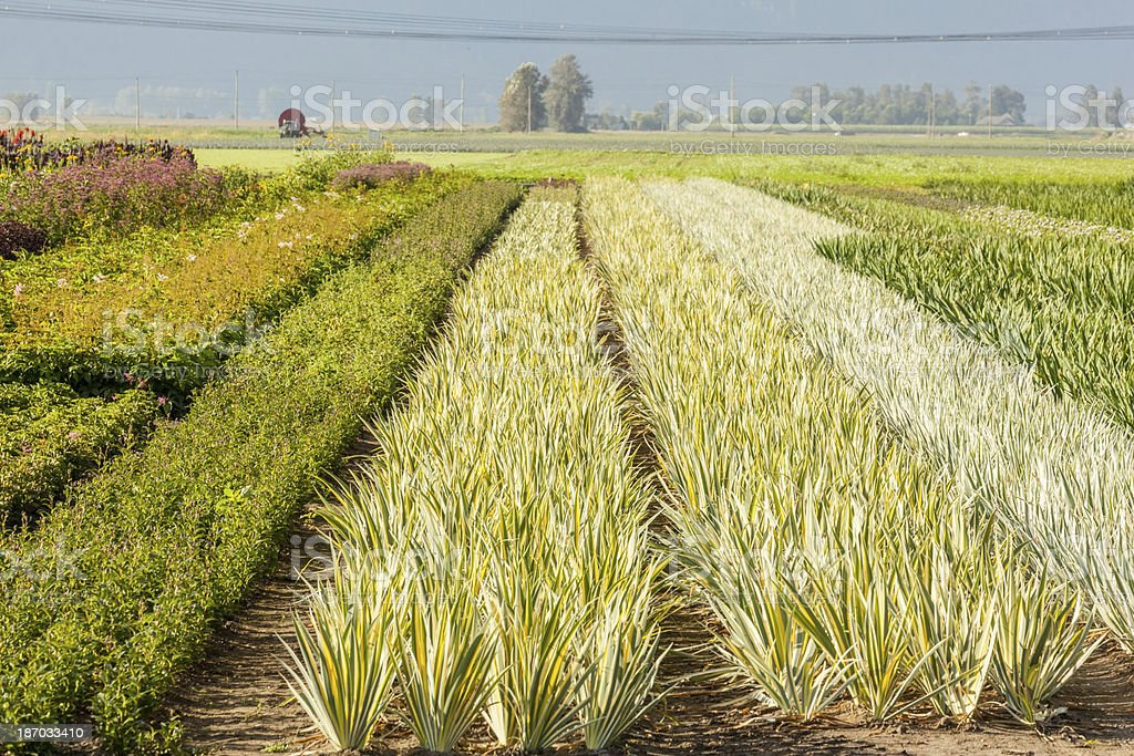 Rows of Landscape Plantings royalty-free stock photo