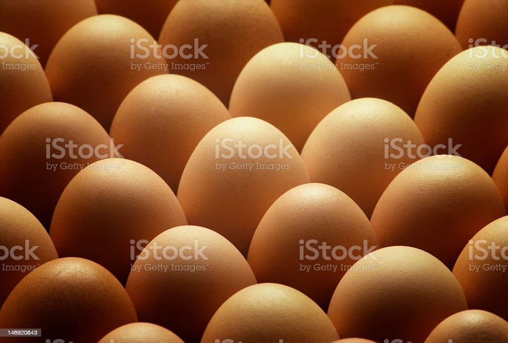 Rows of many brown country eggs  stock photo