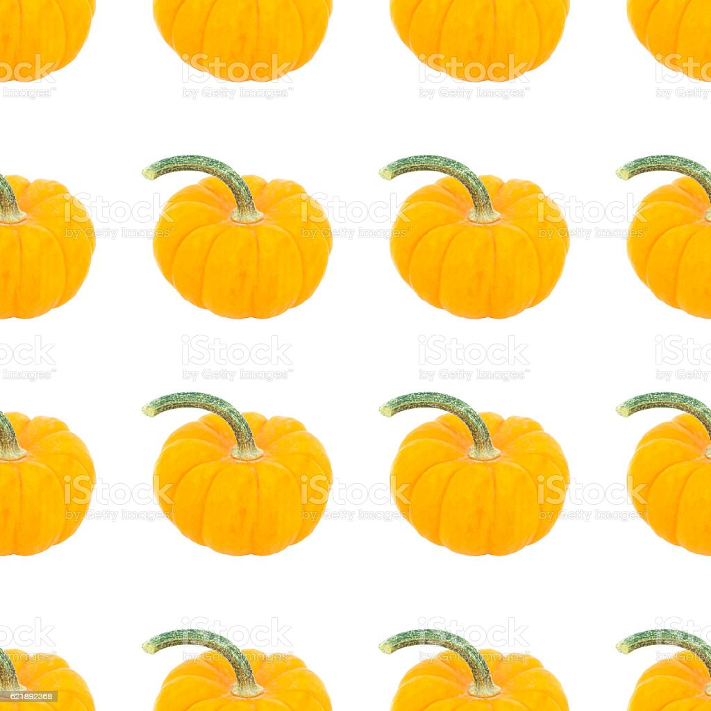 Rows of pumpkins on white background stock photo