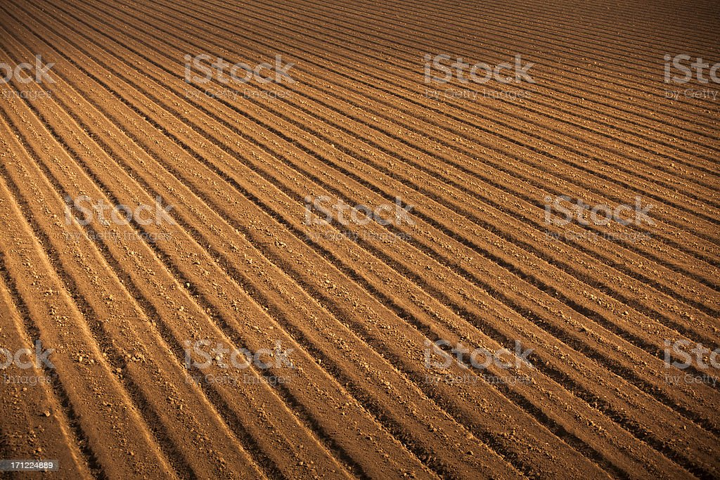 Rows of seed on fertile farm land stock photo
