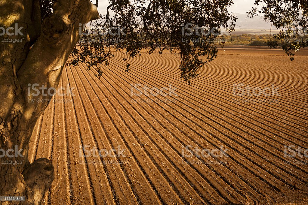 Rows of seed on fertile farm land stock photo