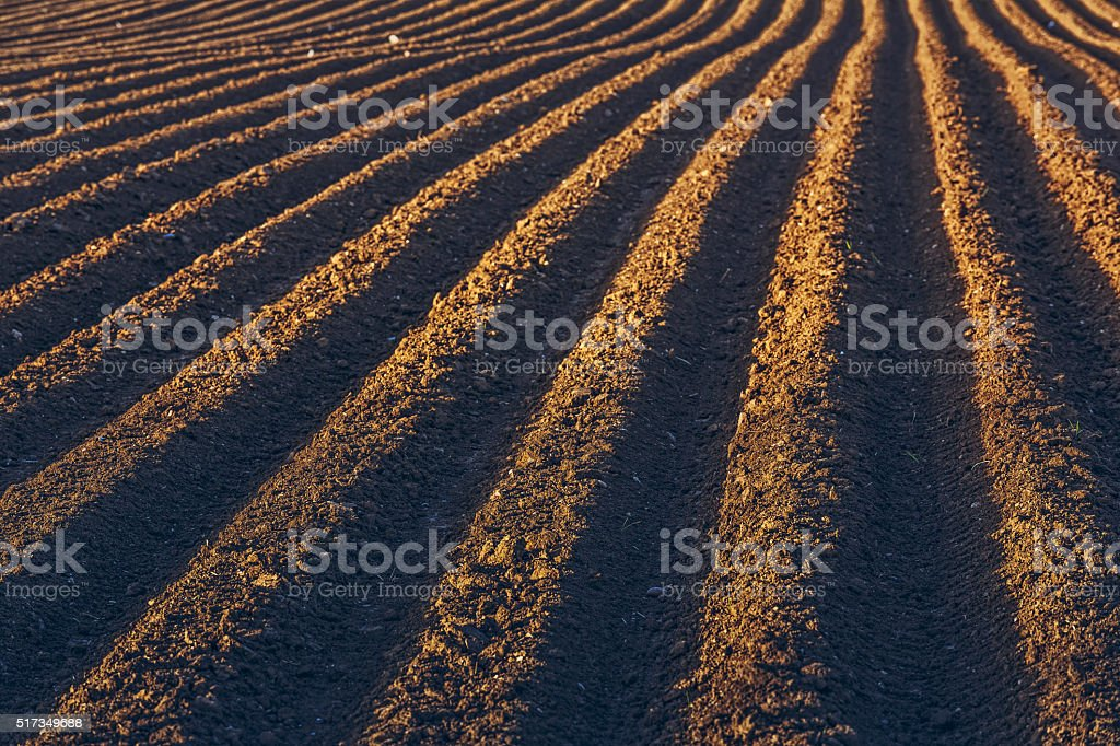 Rows pattern in a plowed field stock photo
