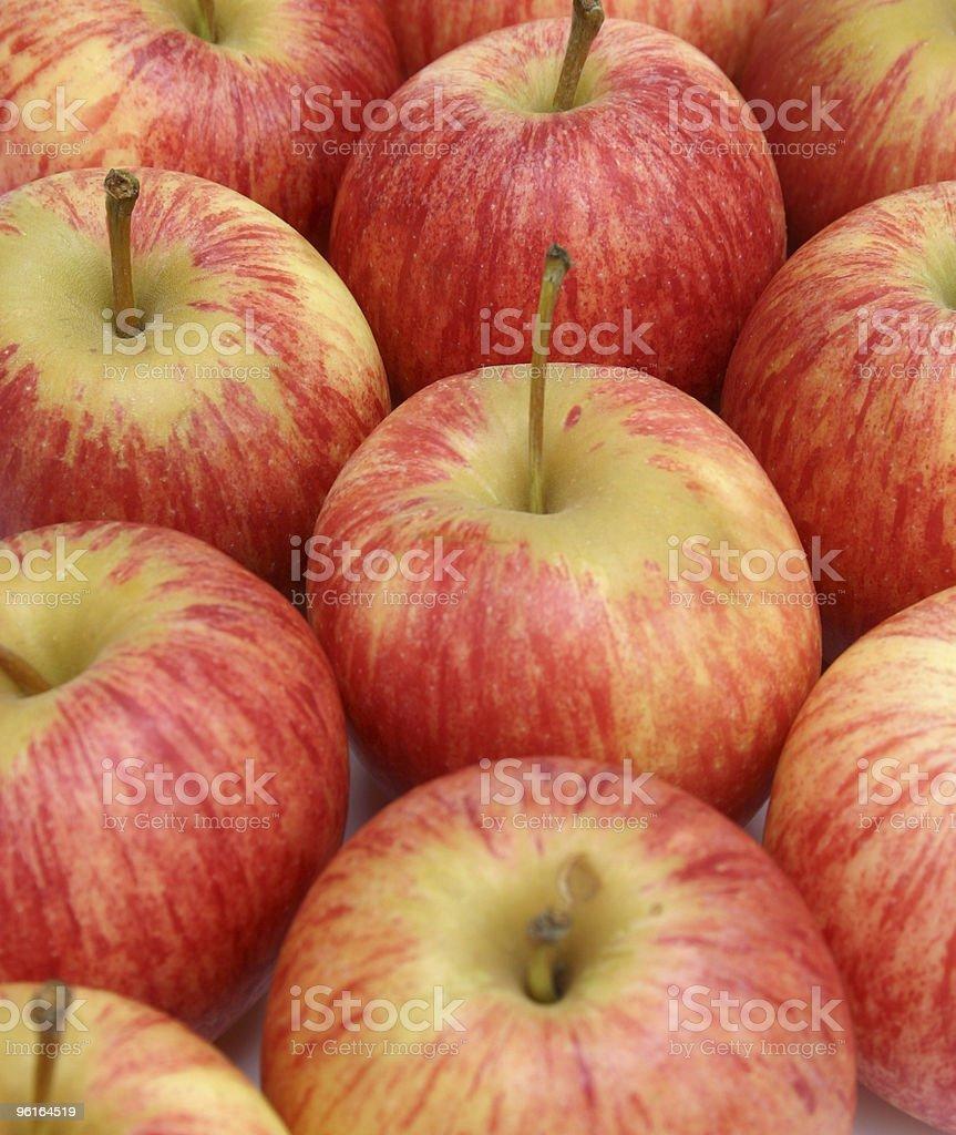 Royal Gala apples stock photo