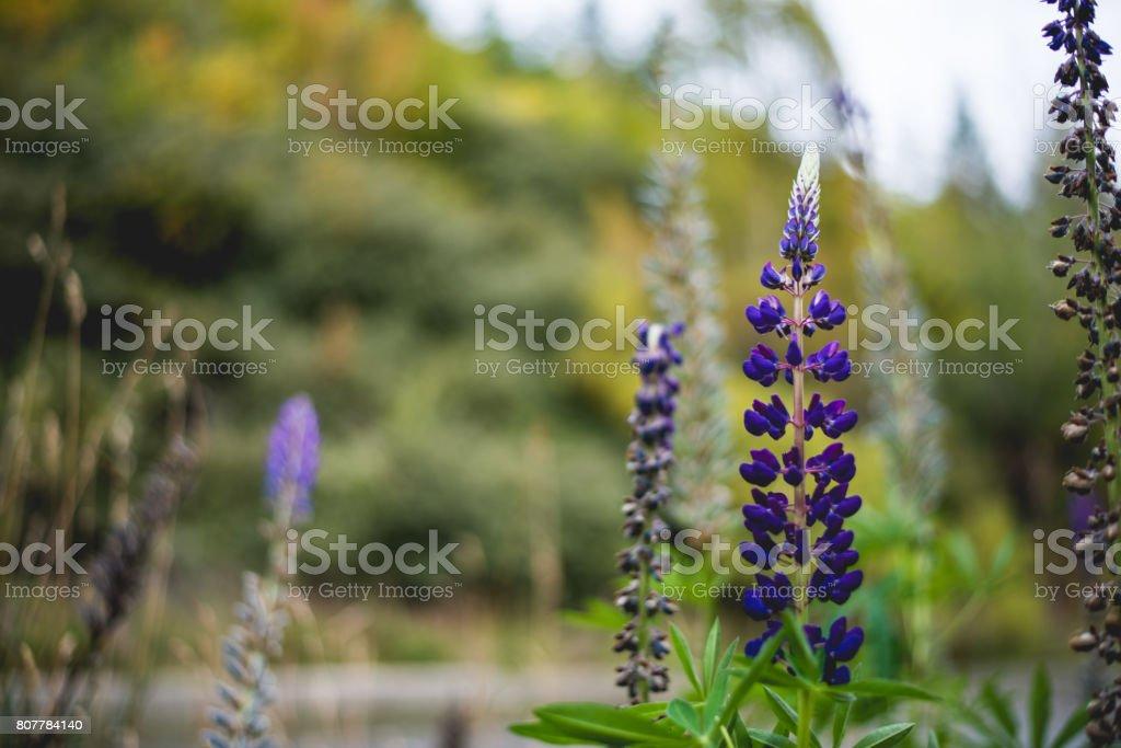 Royal purple flowers stock photo