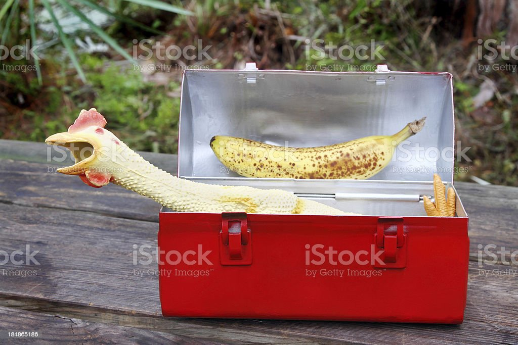 Rubber chicken in red lunch box stock photo