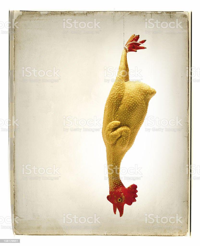 rubber chicken stock photo