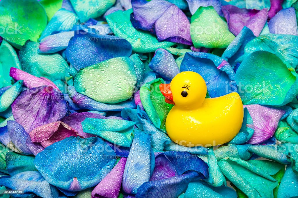 Rubber Duck In A Pool Of Dyed Rose Petals royalty-free stock photo