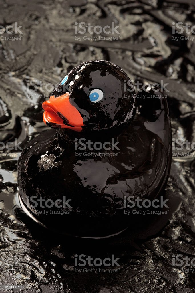 Rubber duck in oil slick stock photo