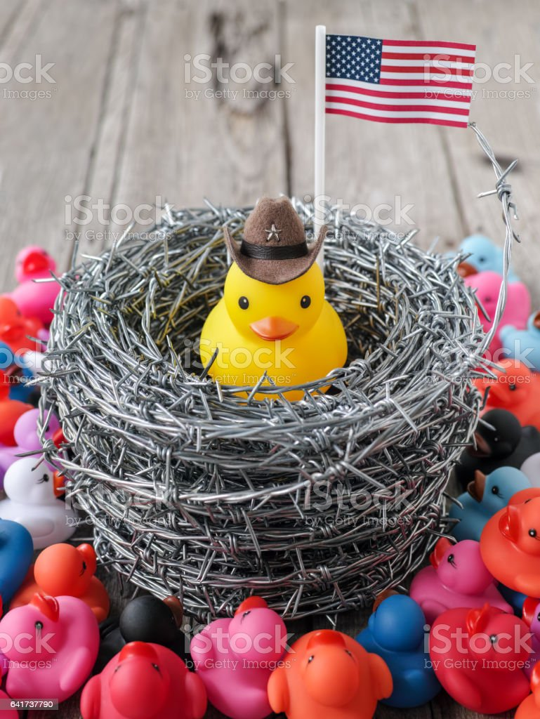 Rubber duck representing chief of the United States sits inside a coil of barbed wire with other colour ducks on the outside trying to get in. stock photo