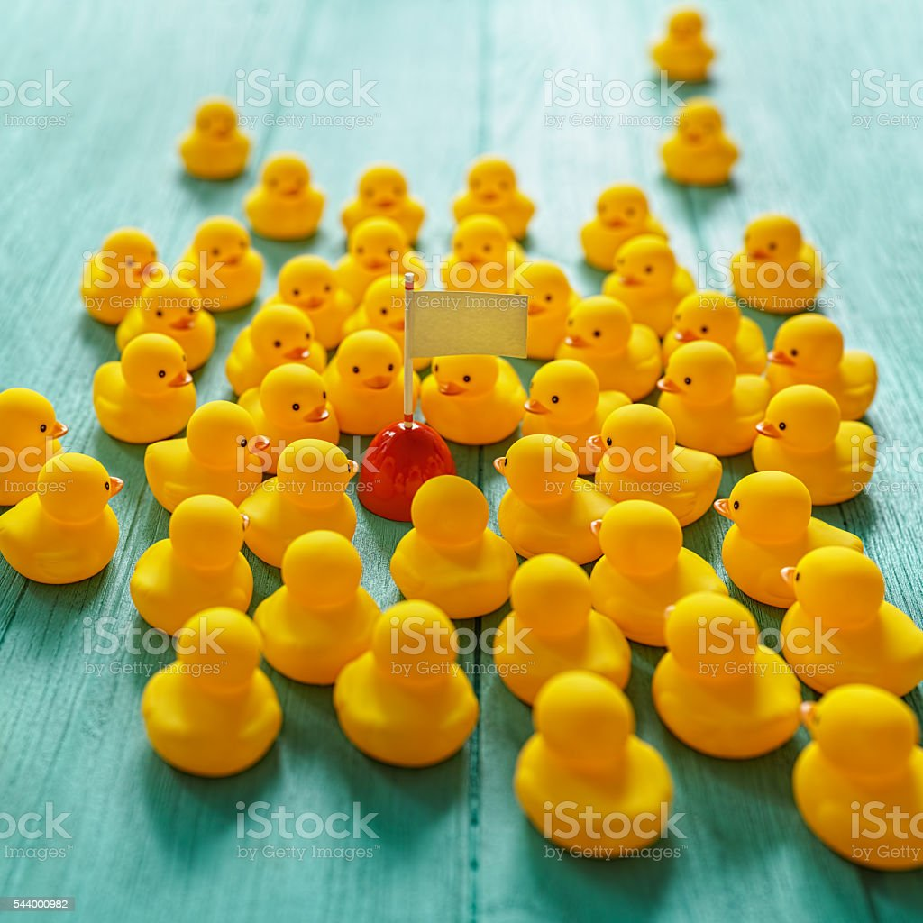 Rubber ducks gathering around a buoy with flag. stock photo