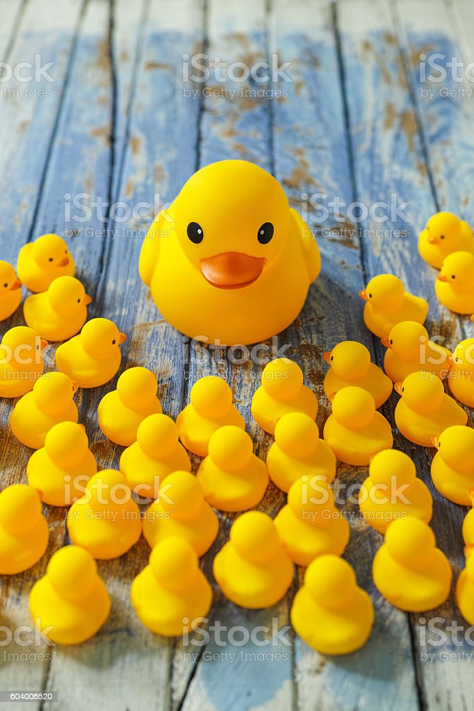Rubber ducks gathering around a large Mother duck. stock photo