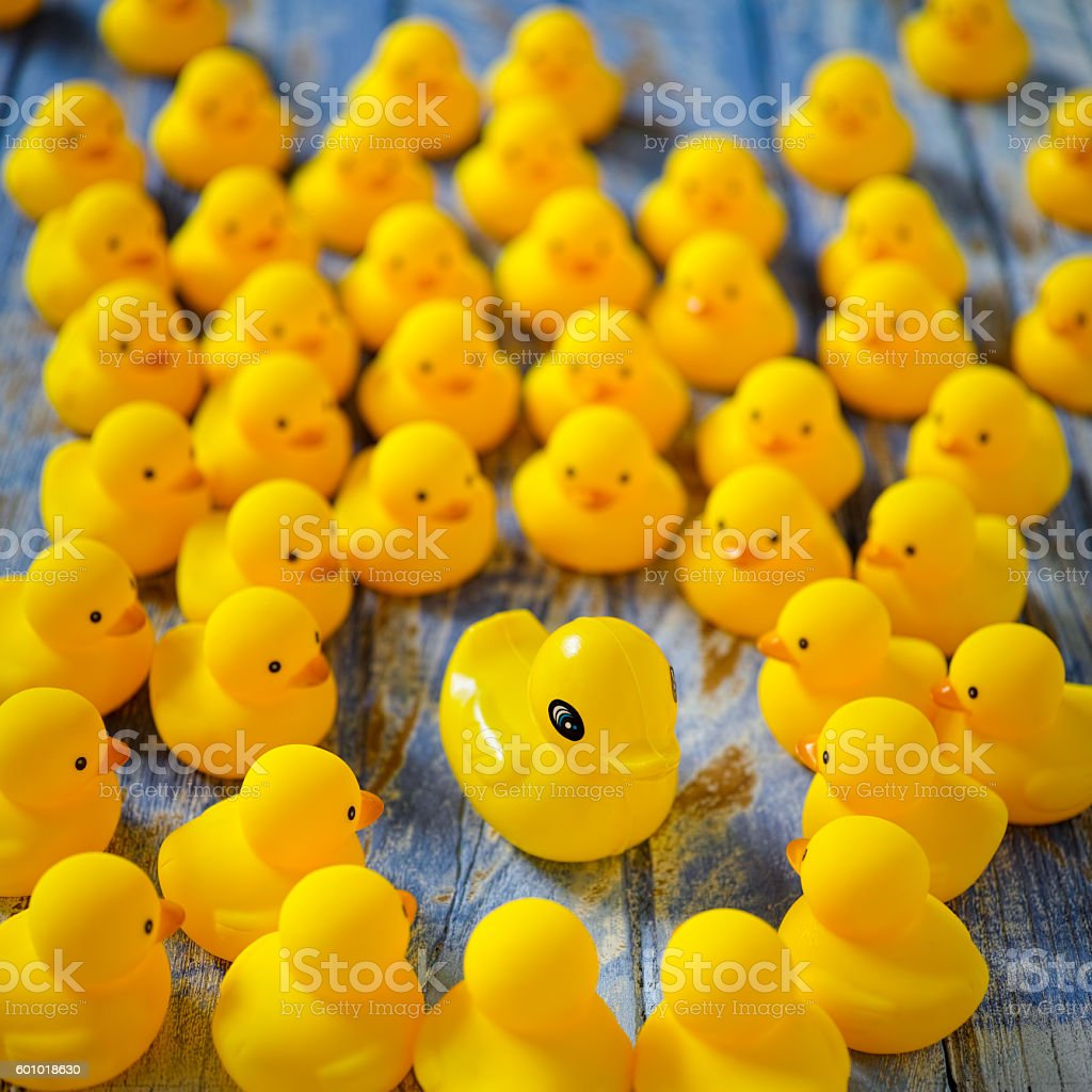 Rubber ducks gathering around a strange different duck. stock photo