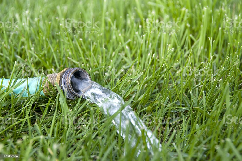 Rubber Garden Hose Watering the Lawn royalty-free stock photo