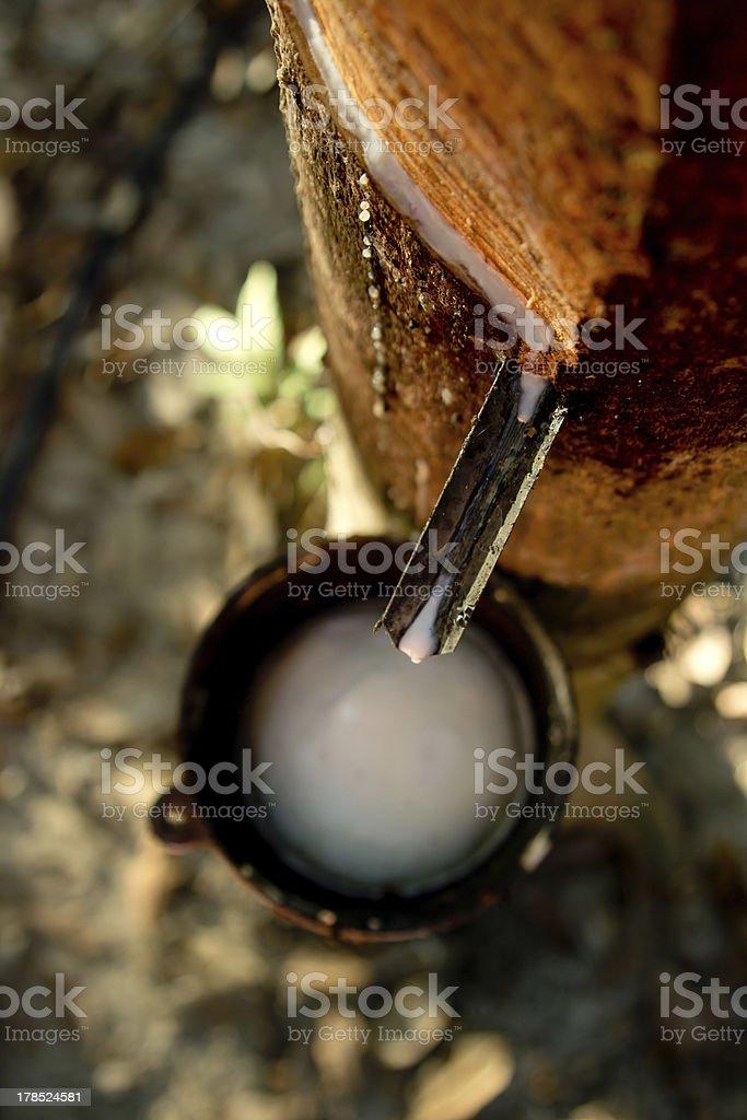 Rubber milk stock photo