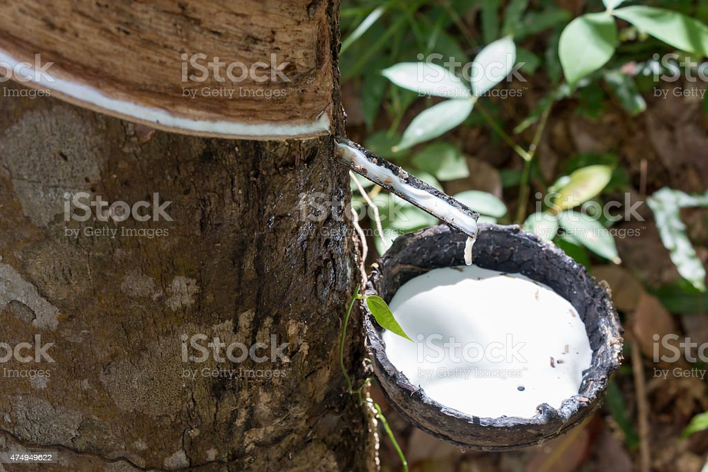 Rubber tapping in Thailand stock photo