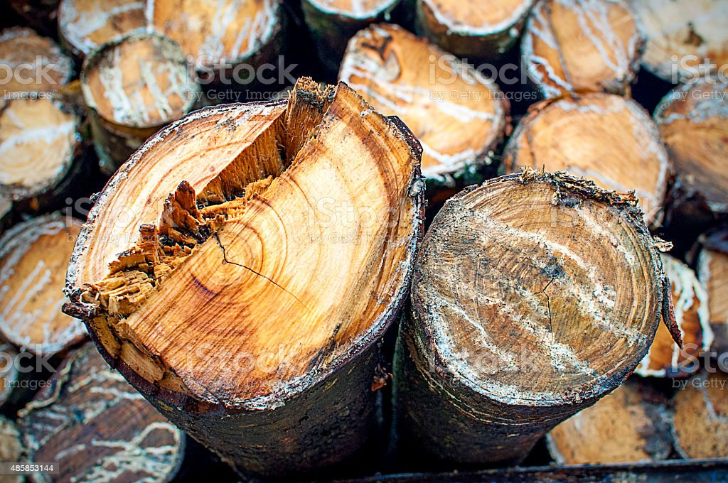 rubber wood stock photo